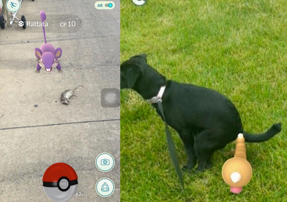 Pokémon perfecto