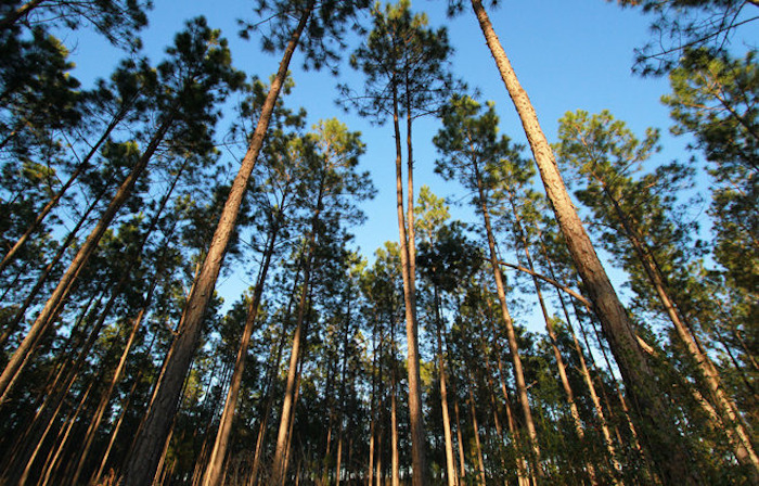Conservación Forestal